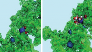 Snapshots from the classical molecular dynamics simulation show several lead ions bound to hemicellulose along the unbinding path — an energetically strongly unfavourable process.