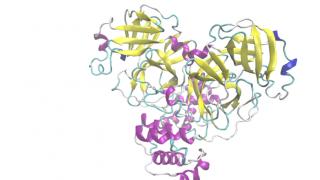 Structure SARS-Cov2