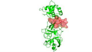 SARS-CoV-2 Main Protease