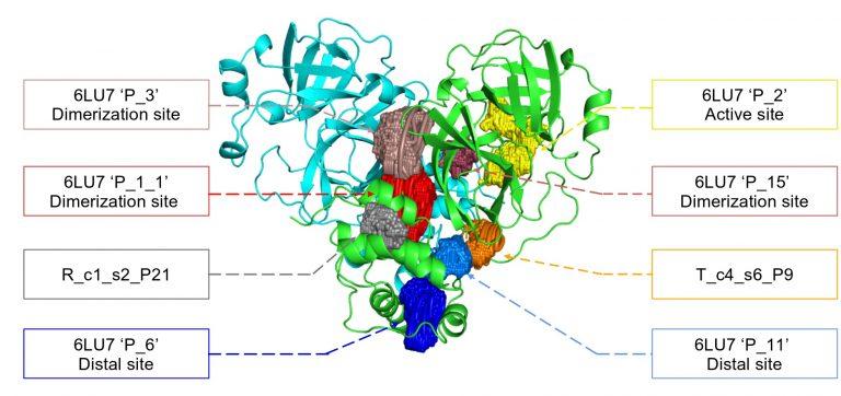 6LU7 SARS–CoV–2 protease structure